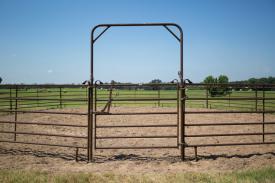 Horse Panels